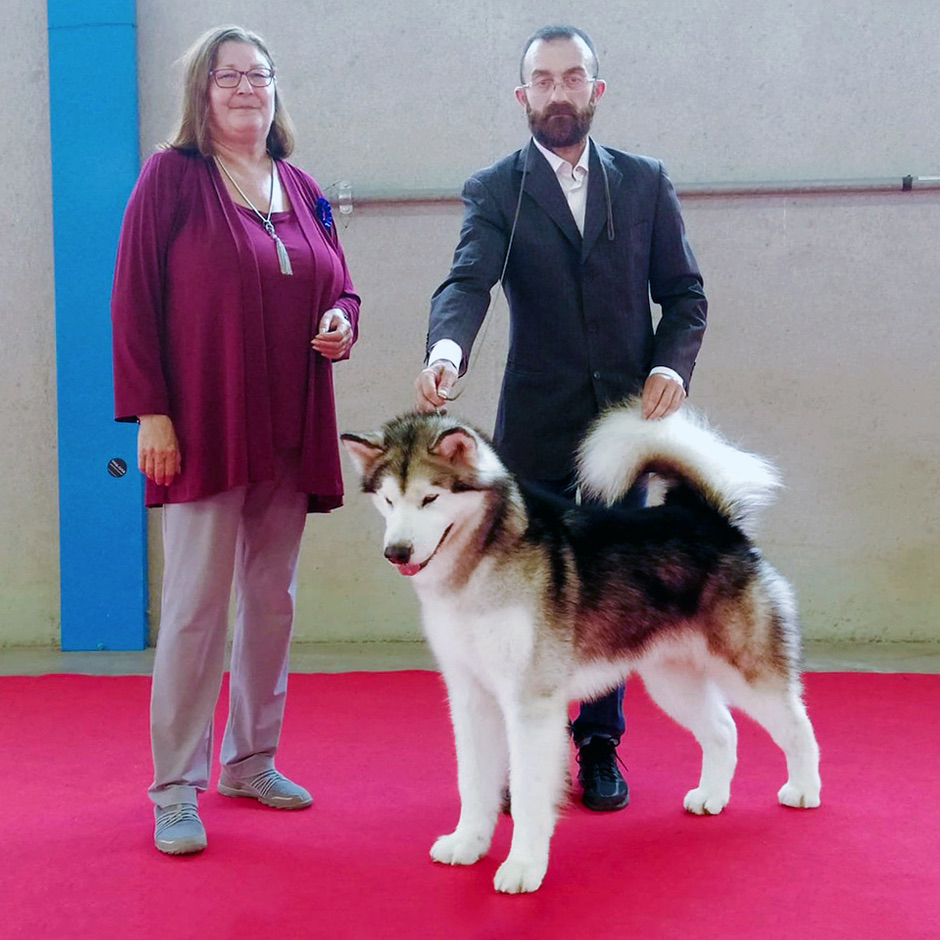 Carletto The Magician Moet Chandon Alaskan Malamute